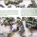 Kale-blog3